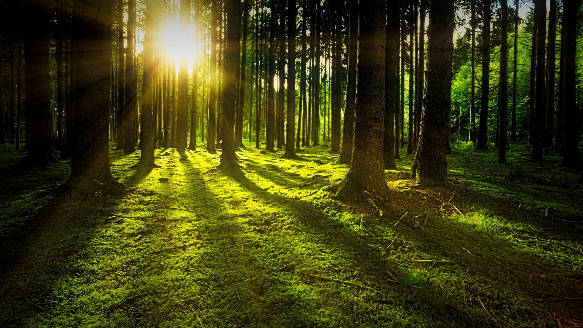 trees-3294681_1920 (1)